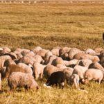 POSAO NEMAČKA – Posao sa osnovnim znanjem nemačkog jezika – Potreban pomoćnik na farmi za KOŠENJE TRAVE, LAKŠE POSLOVE RENOVIRANJA I HRANJENJE ŽIVOTINJA!