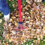 POSAO Austrija – Potreban baštovan (vrtlar) – posao u okolini Beča!