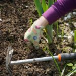 POSAO NEMAČKA – Posao baštovan / vrtlar Nemačka – potrebni radnici za sadnju i negovanje cveća i uređenje zelenih površina!
