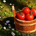 POSAO  AUSTRIJA – Posao BRANJE POVRĆA AUSTRIJA – Potrebni radnici za negu zasada i branje povrća na farmi organske hrane!