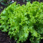 SEZONSKI POSAO AUSTRIJA – Posao na poljoprivrednom imanju Austrija – pomoć oko uzgoja povrća i cveća – iskustvo NIJE neophodno!