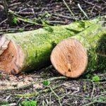 OGLASI ZA POSAO U NEMAČKOJ – Traže se šumski radnici – satnica od 12€!