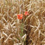 POSAO U NEMAČKOJ – Potrebni pomoćnici na farmama na više lokacija u Nemačkoj – uzgoj životinja i nega biljaka – NIJE NEOPHODNO ISKUSTVO!