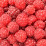 SEZONSKI POSAO U NEMAČKOJ – Posao branja jagoda, malina i kupina – poslodavac obezbeđuje smeštaj i obroke – potrebno 50 osoba