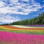 POSAO INOSTRANSTVO – Holandija – rad sa cvećem – sezonski ili stalni posao! Satnica 10€!