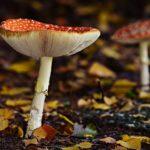 POSAO INOSTRANSTVO – Posao Holandija – rad na ubiranju šumskih plodova – sezonski ili stalni posao! Satnica 10€!