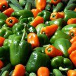 POSAO INOSTRANSTVO – Posao Holandija – rad na plantaži paprika – sezonski ili stalni posao! Satnica 9,7€!