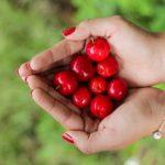 POSAO U NEMAČKOJ – Minhen i okolina – 15€ netto – Sezonsko branje voća – Svi pasoši!